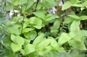 pejiteの植物たち