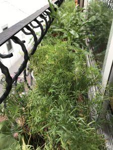 植物たちもスッキリ!!